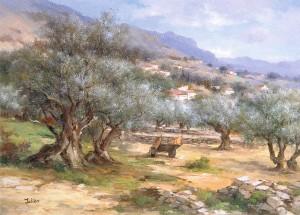 Champs d'oliviers de Provence
