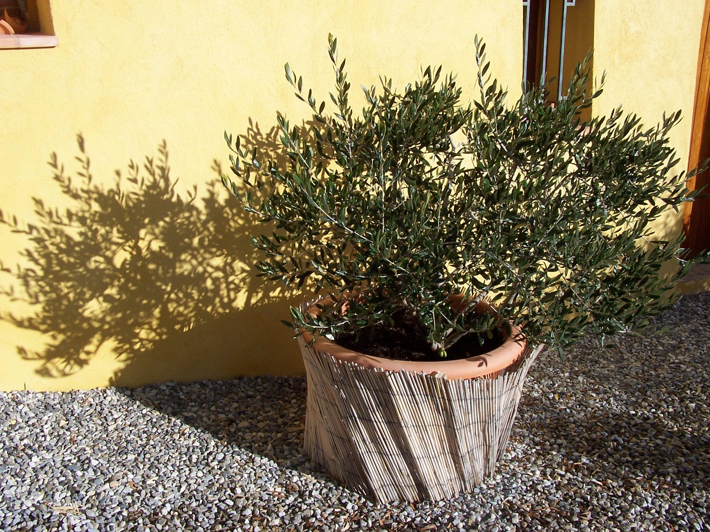 l olivier en provence