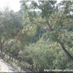 Bois de chênes en provence