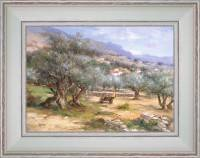 Olive tree field of Provence
