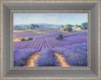Lavenders as far as the eye can see