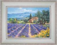 Fields of lavender, Brooms and Olive trees