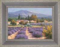 Fields of lavender in the Provençal Drôme