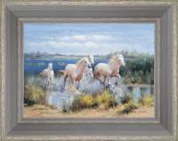 Horses of the native of Camargue