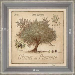 Olive-tree of Provence - dimension 40 x 40 cm - Green