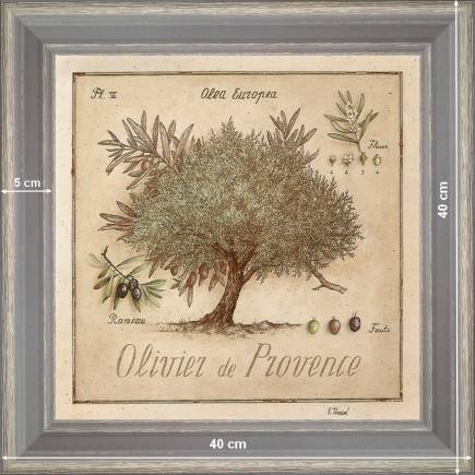 http://tableaux-provence.com/1170-zoom/olive-tree-of-provence.jpg