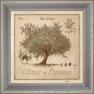 Olive-tree of Provence