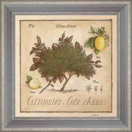 https://tableaux-provence.com/39-179/lemon-tree-azure-coast.jpg
