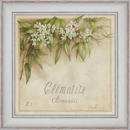 http://tableaux-provence.com/330-zoom/deco-of-charm-clematite-armandii.jpg
