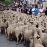 Village envahit par les moutons
