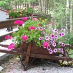Brouette fleurie