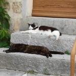 Les chats lézardes