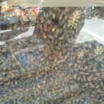 intérieur d'un cadre à ruche