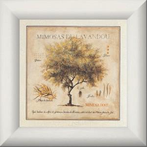 Mimosas du Lavandou