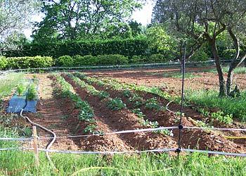 jardin potager en provence