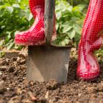 jardinage-botte-terre-main-10236382