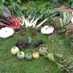 Pour le jardin provençal, Septembre c'est aussi la rentrée !
