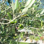 Couleurs provençales - vert tendre