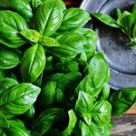 Les Herbes de Provence en cuisine – saison 3